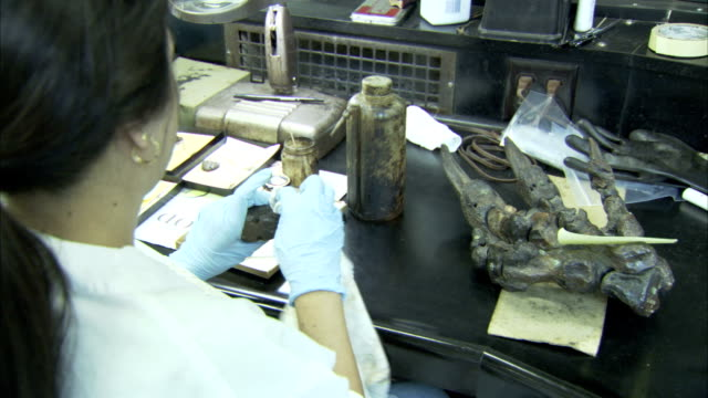 A woman scrubs a fossil. Available in HD.