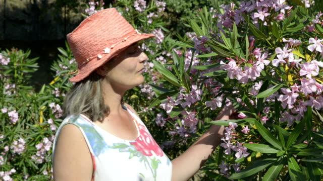Woman smelling flowering Oleander (Nerium)