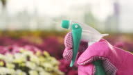 Woman spraying flowers