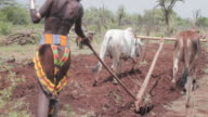 Woman steers cattle