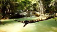 Frau Schwimmen Sie im stream