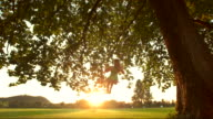 HD DOLLY SLOW MOTION: Woman Swinging At Sunset
