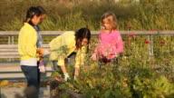 Woman teaching three girls how to garden