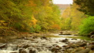 WS, Woman throwing pebbles into forest river, Autumn, Phoenicia, New York, USA