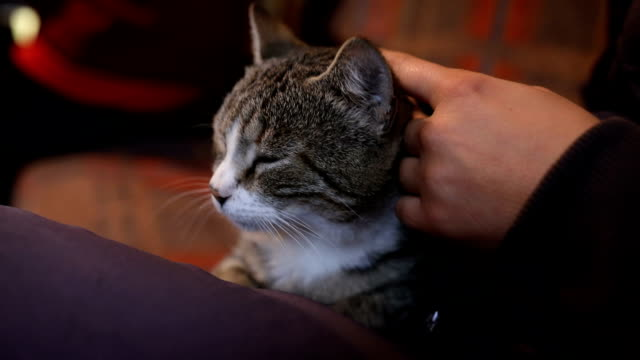 Woman touching and talking to cat in her arm while combing her