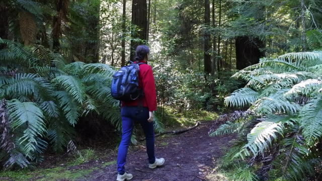 Woman travels and hikes alone in Giant Redwoods Forest