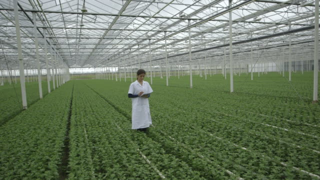 Woman using digital tablet in greenhouse