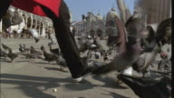 MS SLO MO Woman walking among pigeons on Place San Marco/ Venice, Italy