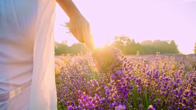 SLO MO Woman walking in field of lavender