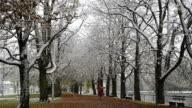 MS Woman walking in snowfall one avenue of trees along /  Landshut, Bavaria, Germany