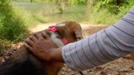 Woman walking With Animal Dog Pet Outdoors slo-mo