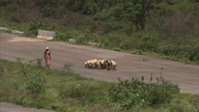 A woman walks along a rural road with a herd of goats.