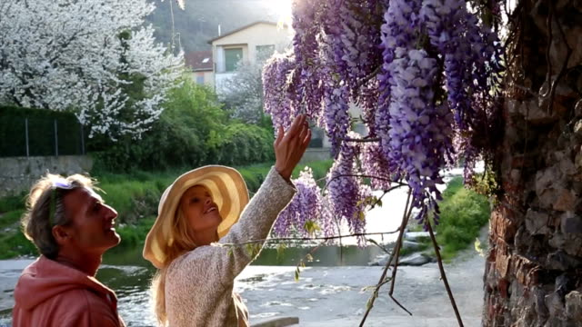 Woman walks past wisteria blossoms, pauses to enjoy perfume