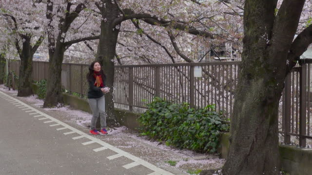 Woman watches cherry blossoms at the Nakaikegami canal