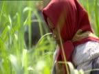 Woman wearing headscarf working in field India