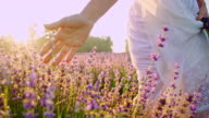 SLO MO Woman's hand caressing lavender in the field