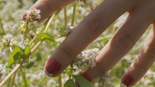 HD: Woman's Hand Caressing The White Flowers