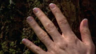 Woman's hand feeling bark on tree trunk