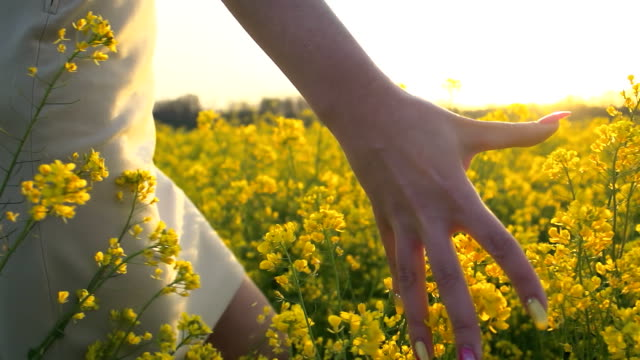 HD SLOW-MOTION: Woman's Hand Touching Canola Flowers