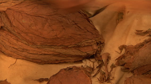 A woman's hands sort tobacco leaves at a cigar factory.