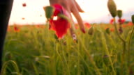 SLO MO Woman's Hands Touching Poppy Flowers
