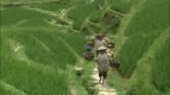 Women carry heavy baskets on poles across shoulders as they climb path cut into hillside of Dragon's Backbone rice terraces, Guilin, Guangxi Zhuang
