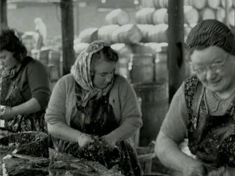Women gut fish at Great Yarmouth