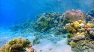 Wonderful Coral reef with lot of fisch on Red Sea