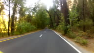 Wonderlust - USA, Road Trip, GoPro mounted on campervan driving down forest road