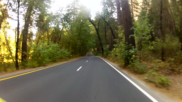 Wonderlust - USA, Road Trip, GoPro mounted on campervan driving down forest road