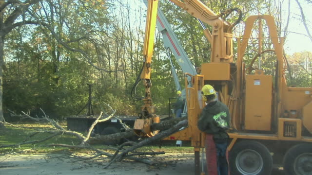 ZI MS Wood chipper picking up limbs cut out from tree in forest, Ann Arbor, Michigan, USA