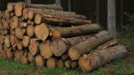 Wood pile in the forest