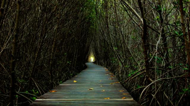Wooden Bridge In Mangrove Forest.