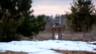 Wooden lantern with a candle stands in the field with young pines.