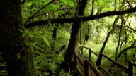 wooden walkway through in deep rainforest; dolly shot