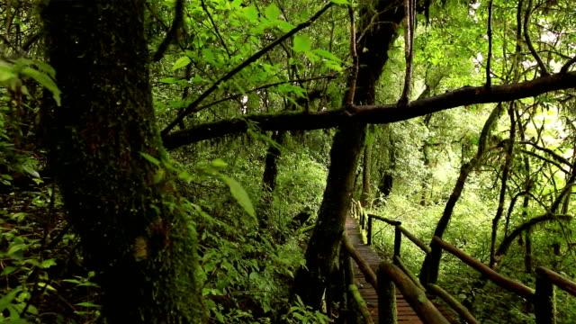 wooden walkway through in deep rainforest; dolly shot