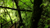 wooden walkway through in deep rainforest,dolly shot