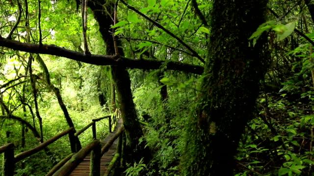 wooden walkway through in deep rainforest,dolly shot