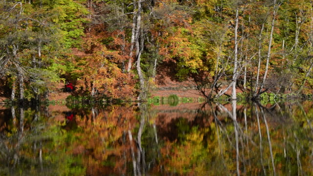 Wooden wharf and trees reflection on the water autumn season