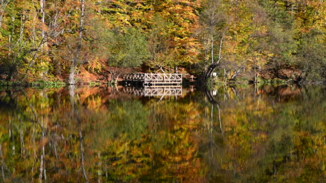 Wooden wharf beside lake and trees. Wooden wharf and trees reflection on the water autumn season