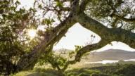 Woodland Sunset - Time Lapse
