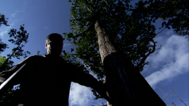 A woodsman stands at the base of a tree and holds an axe. Available in HD.