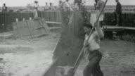 B/W Worker dipping cattle as they walk through vat / Argentina