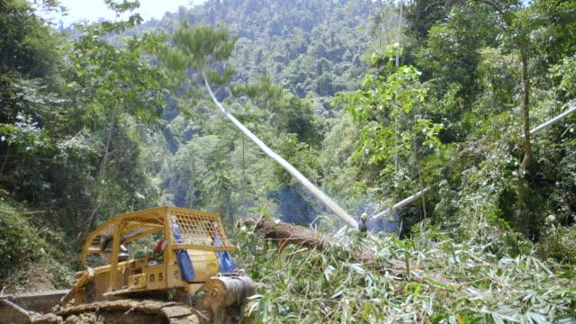 WS PAN Worker felling rainforest tree / Tawau, Sabah, Malaysia