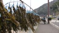A worker hangs racks of seaweed to dry beside a road.