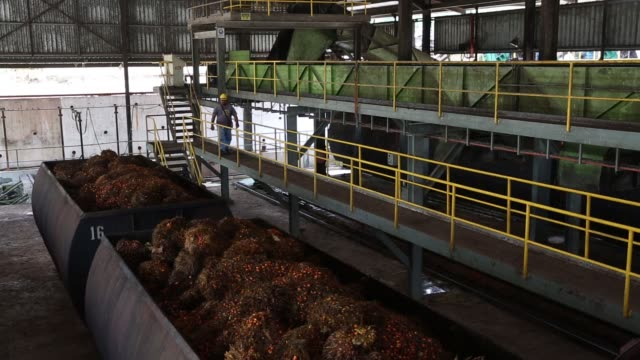A worker monitors vats loaded with palm oil fruit bunches at the sterilisation unit of Bukit Senorang Palm Oil Mill owned by United Malacca Bhd in...