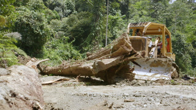 MS Worker moving felled rainforest trees / Tawau, Sabah, Malaysia