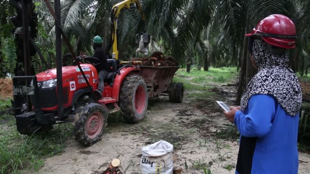 A worker right using a tablet stands next to a trailer with a mechanical arm loading palm oil fruit bunches at the Bukit Senorang palm oil plantation...