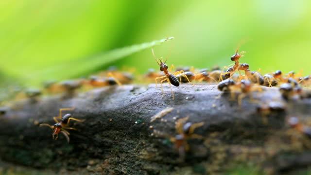 Arbeiter termites
