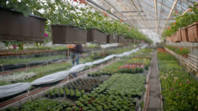Operaio innaffia i fiori a 4 k